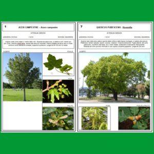 messa in sicurezza e reimpianti di alberi nel territorio comunale di Cavallino-Treporti