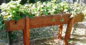 piante sensoriali paolo nardin architetto